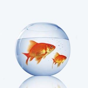poisson rouge dans bocal 300x300 11 trucs pour gérer les colères de votre Ado